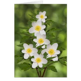 White Flowers Amongst Green Foliage Greeting Card