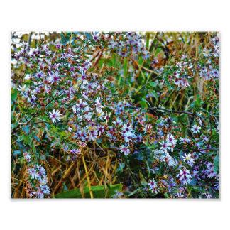 White Flowers Art Photo