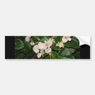 White Flowers Bumper Stickers
