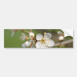 White Flowers of Plum Tree On Bumper Sticker