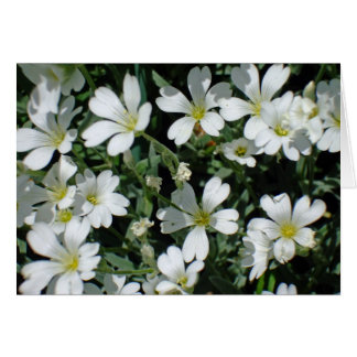 White Flowers on a Bright Day Greeting Card