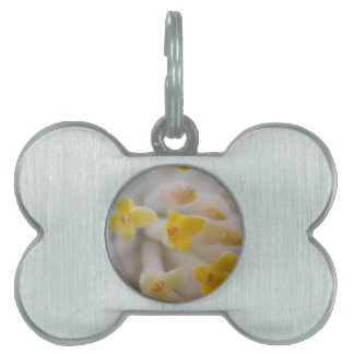 white flowers on tree in spring pet ID tag