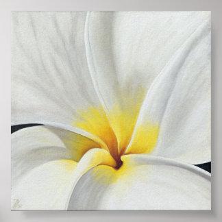 White Frangipani Posters