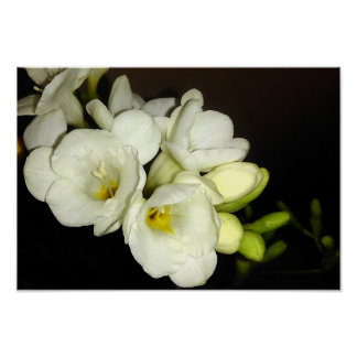 White Freesia Bouquet Poster