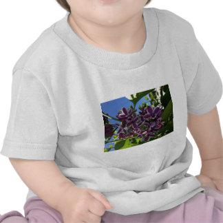 White fringed purple lilac shirts