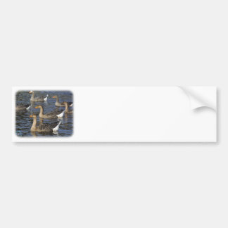 White-fronted Goose 9P52D-008 Bumper Sticker
