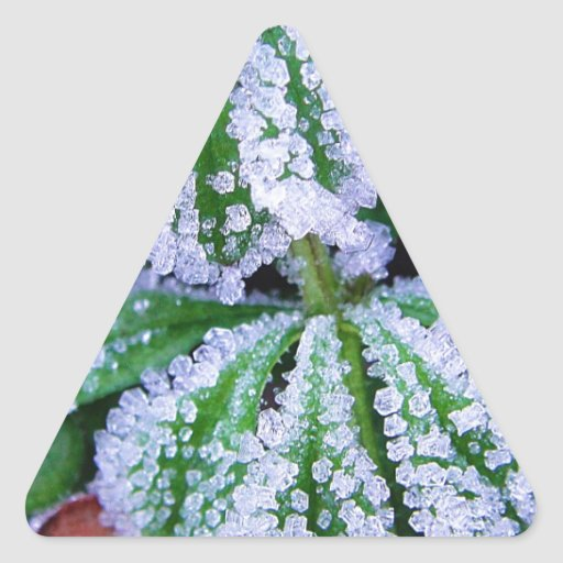 White frost on a beautiful green leaf triangle sticker