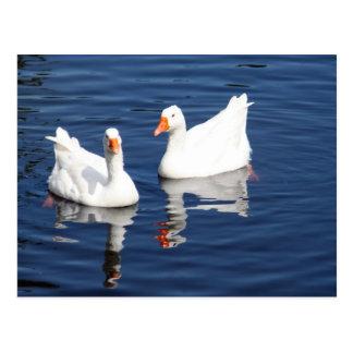 White Geese 9598 Postcard