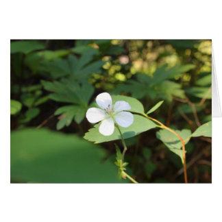 White Geranium Card
