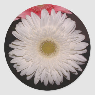 White Gerber Daisy Round Stickers