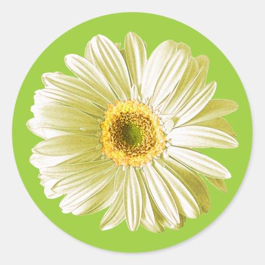 White Gerbera Daisy Flower Classic Round Sticker