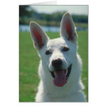 White German Shepherd Dog Greeting Card