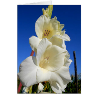 White Gladiolus And The Blue Sky Card