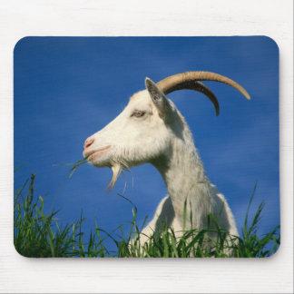 White goat mouse mat