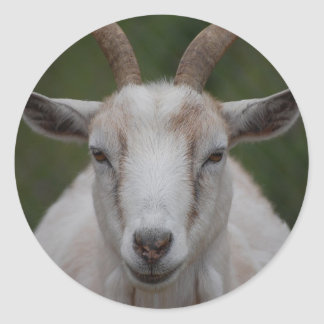 White Goat Sticker