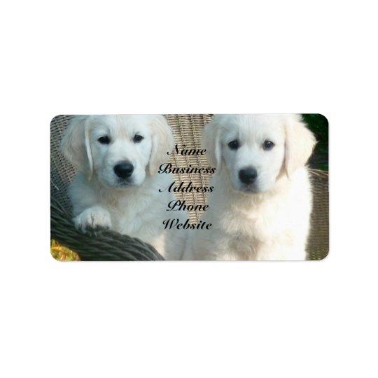 White Golden Retriever Dogs Sitting in Fibre Chair Label