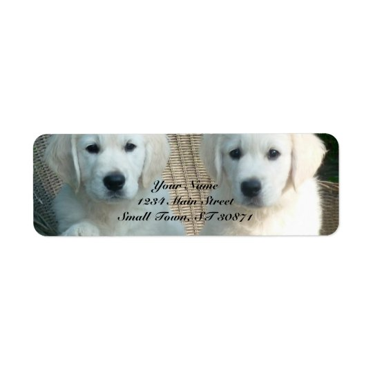 White Golden Retriever Dogs Sitting in Fibre Chair Return Address Label