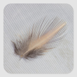 White Goose Feather Still Life Square Sticker