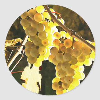 White Grapes Autumn Harvest Watercolor Stickers