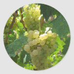 White grapes in a vineyard round sticker