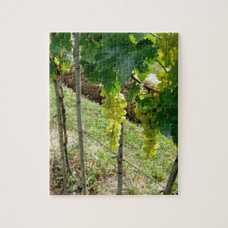 White Grapes on the Vine Jigsaw Puzzle