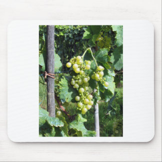 White Grapes on the Vine Mouse Pad