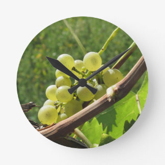 White grapes on the vine . Tuscany, Italy Round Clock