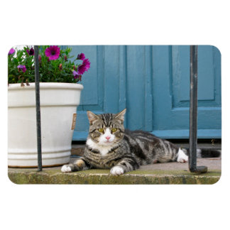 White Gray Tiger Cat on Front Porch Blue Door Rectangular Photo Magnet
