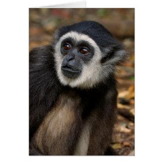 White-Handed Gibbon (Hylobates Lar), Monkeyland Card