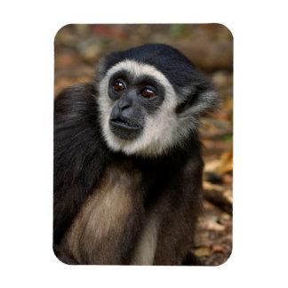 White-Handed Gibbon (Hylobates Lar), Monkeyland Rectangular Photo Magnet