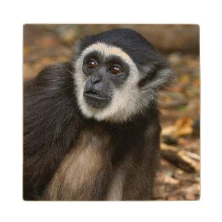 White-Handed Gibbon (Hylobates Lar), Monkeyland Wood Coaster