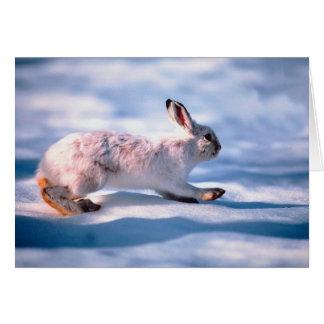 White Hare Card