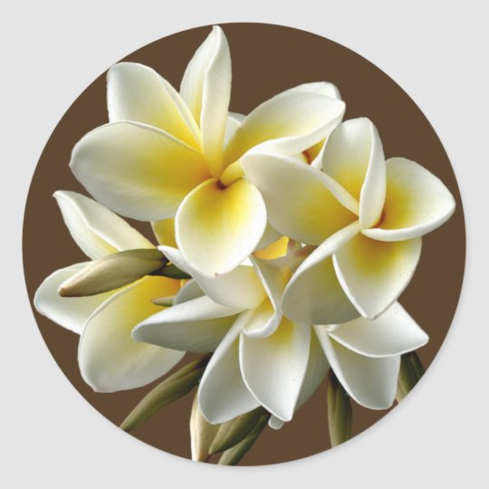 White Hawaiian Plumeria Floral Stickers