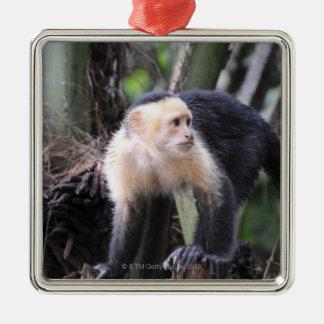 White-headed capuchin, Cebus capucinus. Playa Christmas Ornament