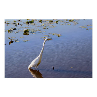 White Heron Refuge Photo Poster