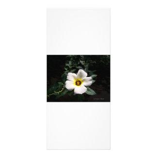 White hibiscus flower red center dark background custom rack card
