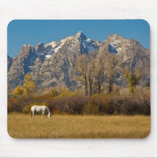 White Horse, autumn, Grand Tetons Mouse Pad