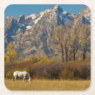 White Horse, autumn, Grand Tetons Square Paper Coaster