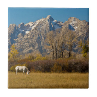White Horse, autumn, Grand Tetons Tile