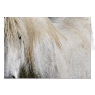 White horse birthday card