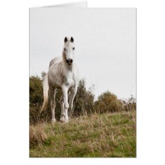 White horse card