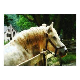 White Horse Closeup Custom Invitations