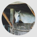 White Horse in Stable Classic Round Sticker