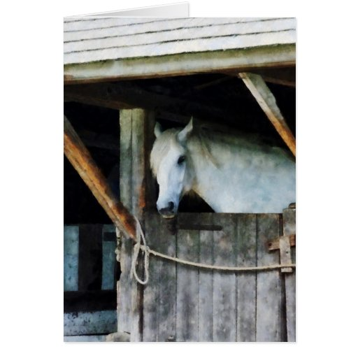 White Horse in Stable Greeting Cards