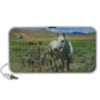 White Horse in the Mountain West Mp3 Speakers