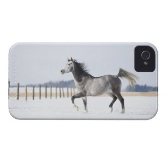 white horse in winter iPhone 4 cover