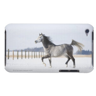 white horse in winter iPod touch Case-Mate case
