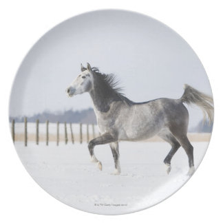 white horse in winter plate