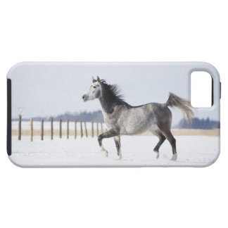 white horse in winter tough iPhone 5 case