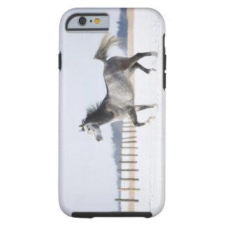 white horse in winter tough iPhone 6 case